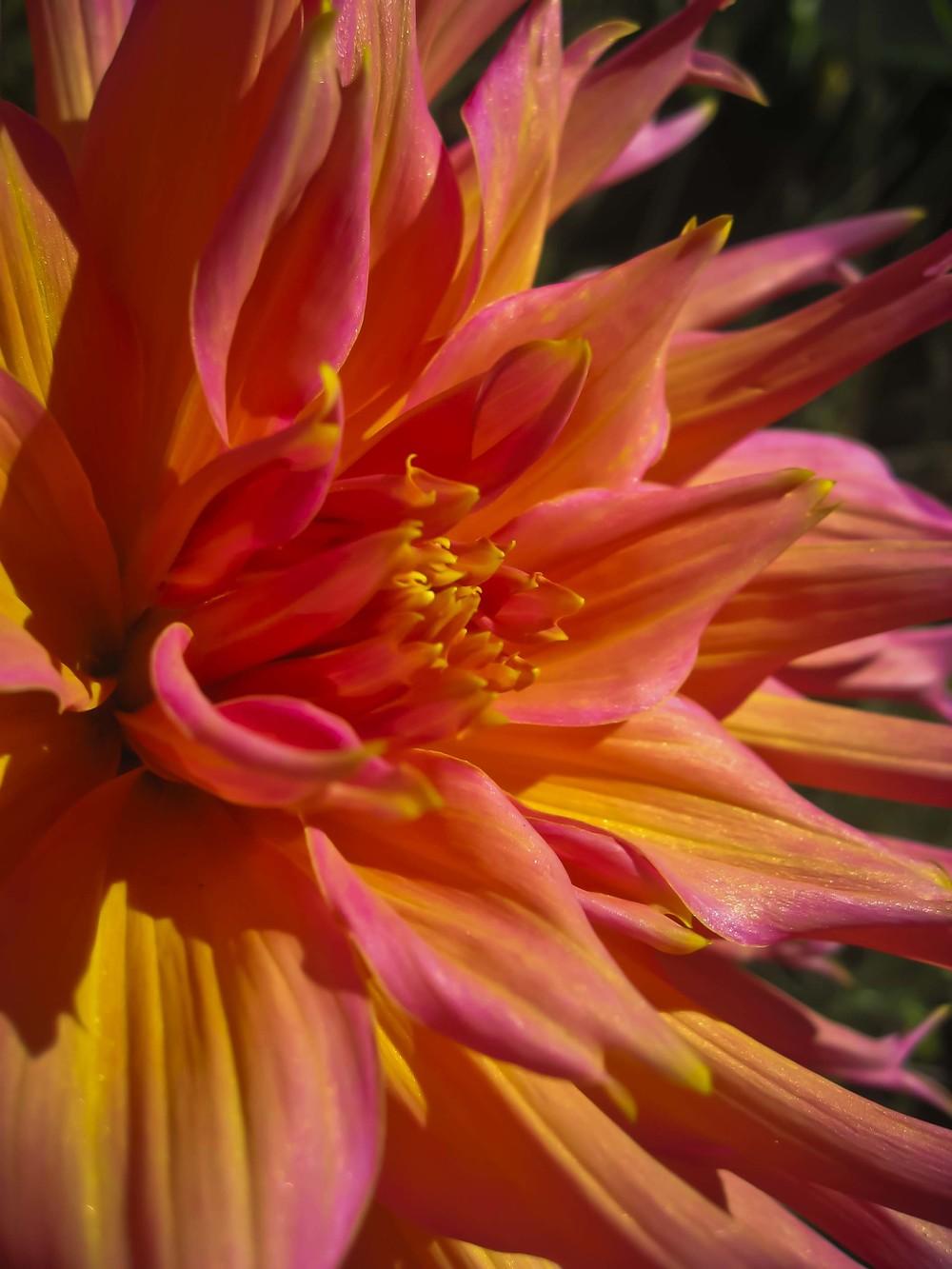 Keen-EyePhoto-dot-com_Flowers (12).jpeg