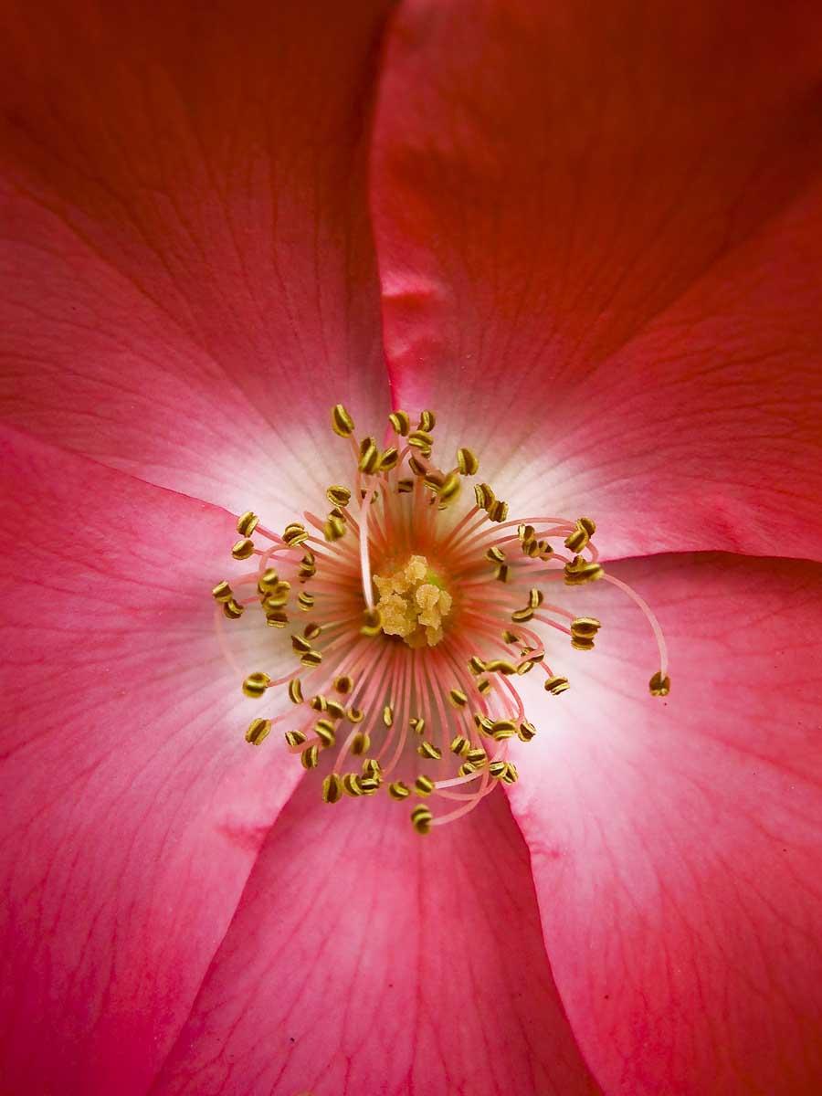 Keen-EyePhoto-dot-com_Flowers (9).jpeg