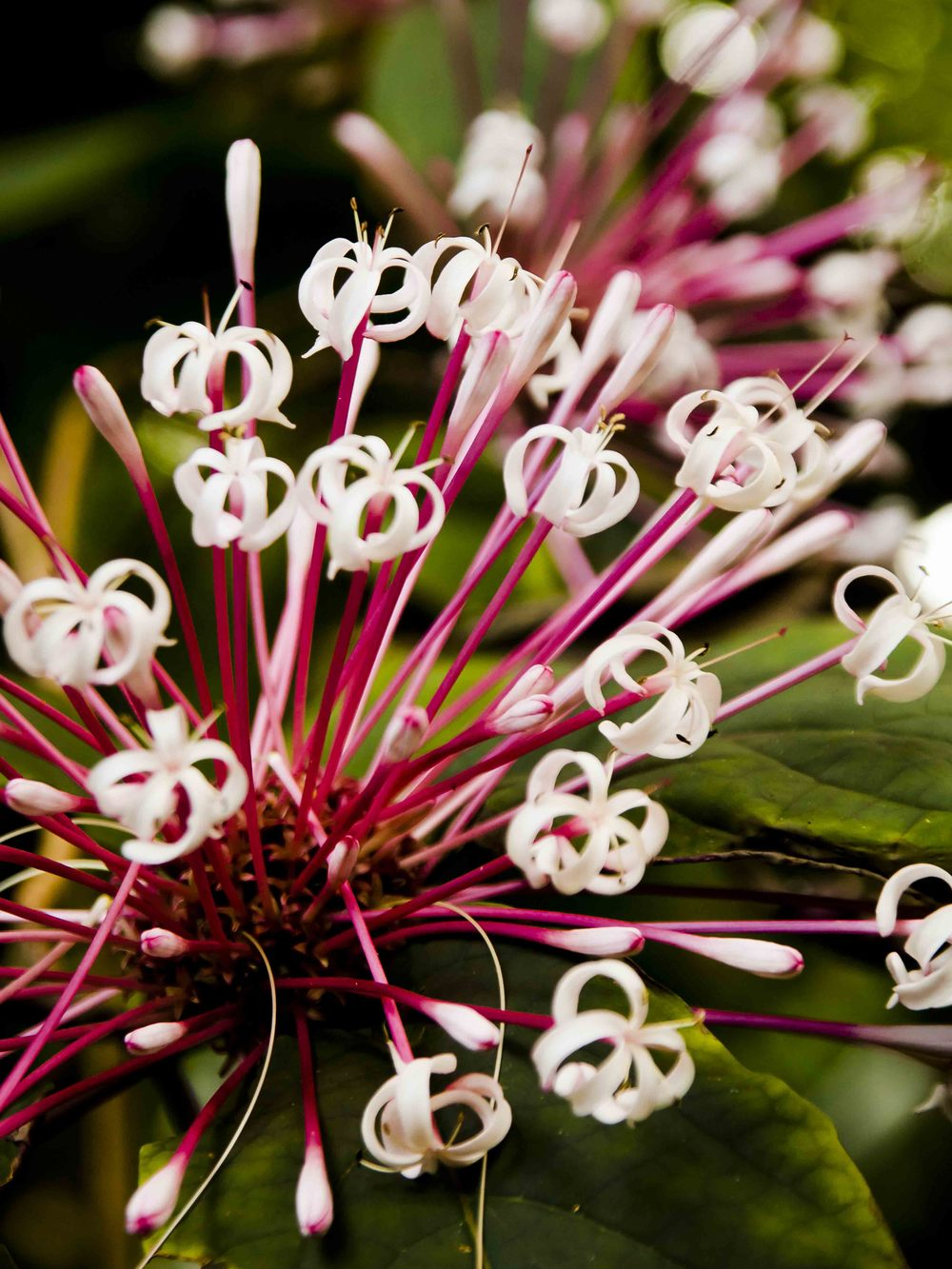 Keen-EyePhoto-dot-com_Flowers (7).jpeg