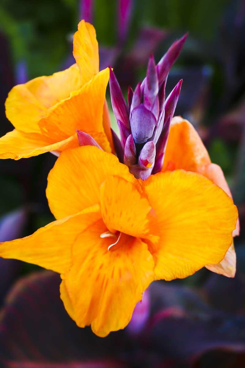 Keen-EyePhoto-dot-com_Flowers (6).jpeg