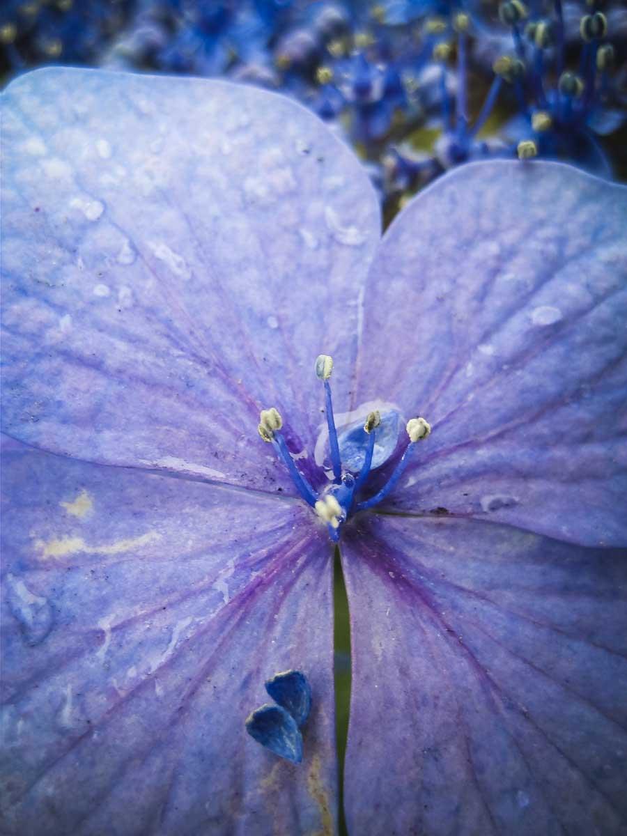 Keen-EyePhoto-dot-com_Flowers (5).jpeg