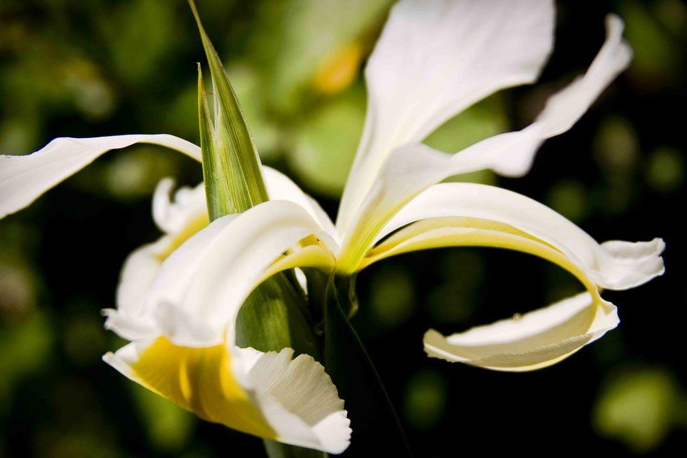 Keen-EyePhoto-dot-com_Flowers (4).jpeg