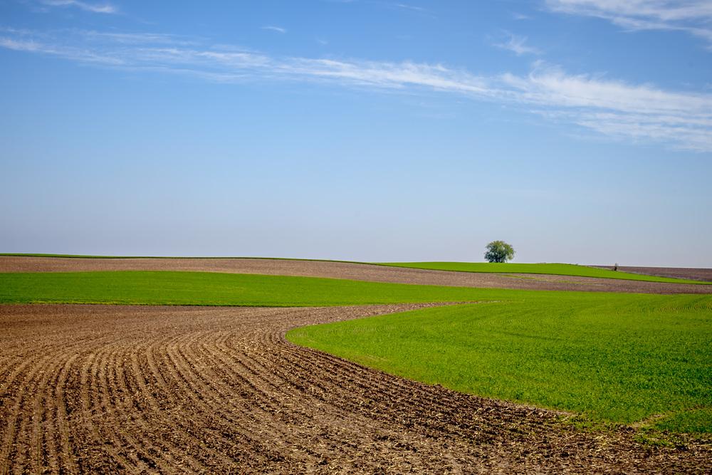 Wisconsin Fields of green. Near Lodi, WI.