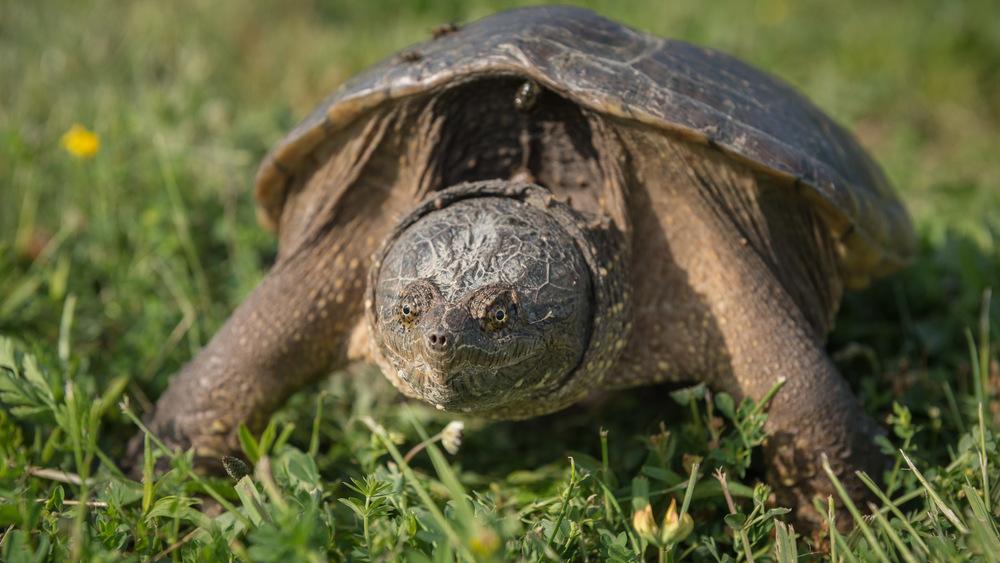 2016-06-20-JeremyJeziorski-Turtle-web-03.jpg