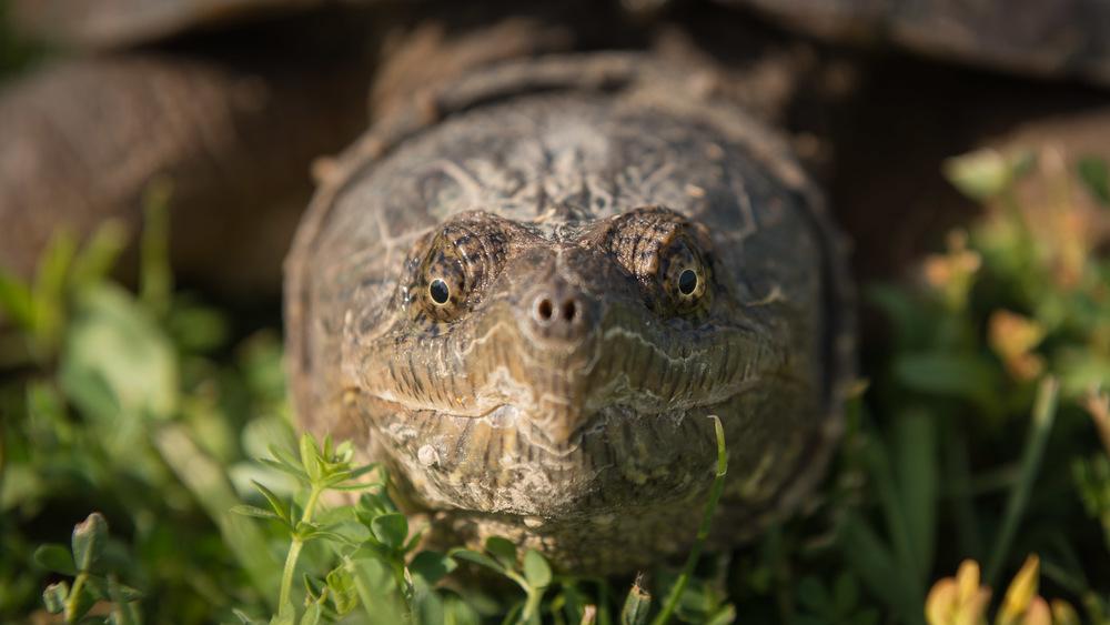 2016-06-20-JeremyJeziorski-Turtle-web-06.jpg