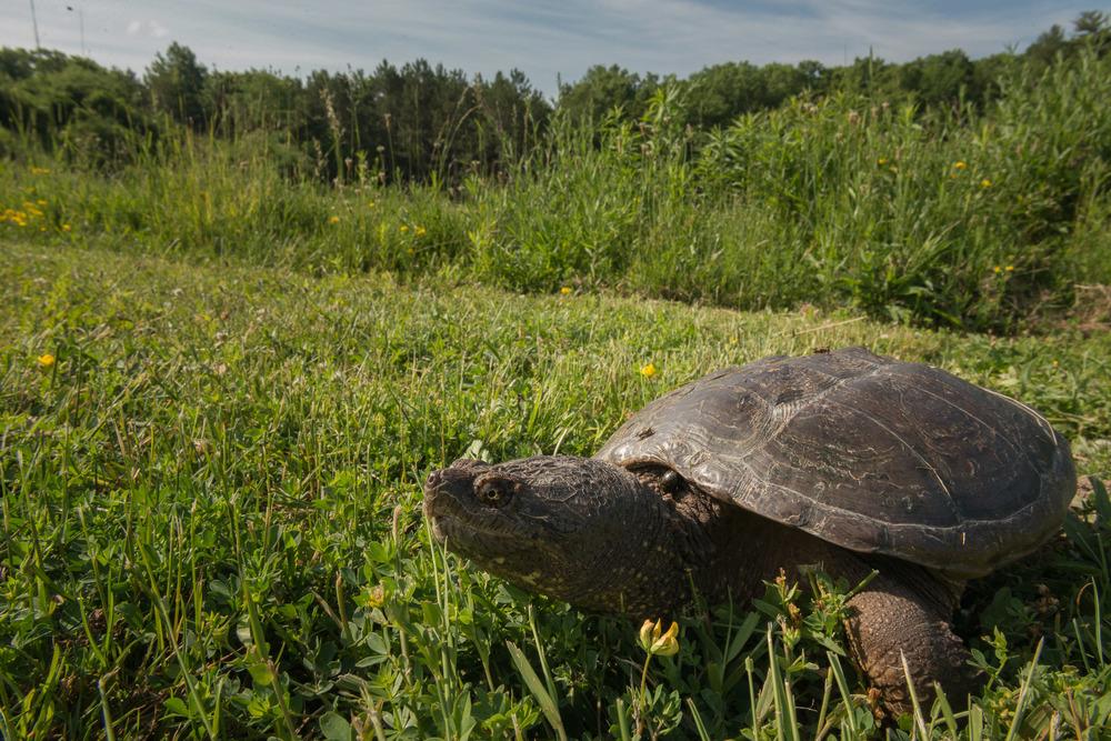 2016-06-20-JeremyJeziorski-Turtle-web-07.jpg
