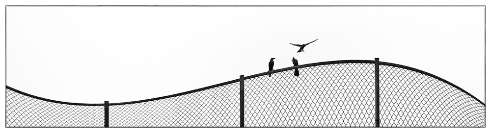 """Number 8 2014,""""Bird on a Wire"""""""