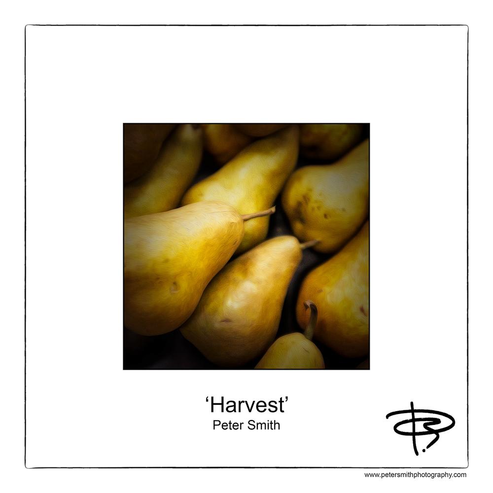 Number 27, 2014, 'Harvest'