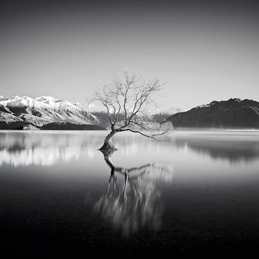 Lake WanakaTree