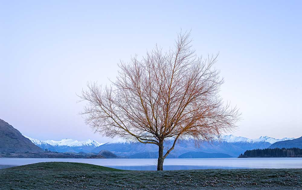 The Wanaka Flame Tree