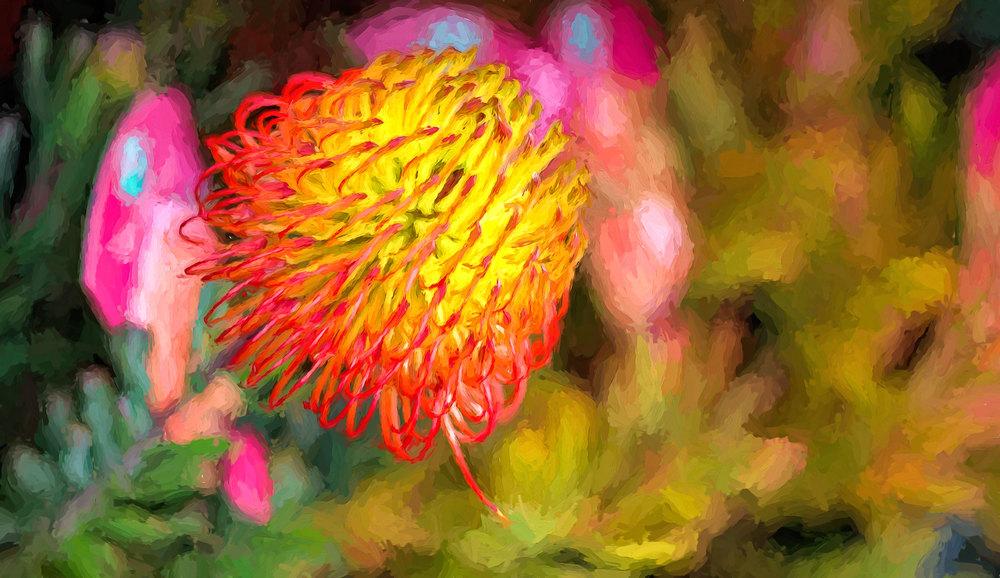 Australian Wattle