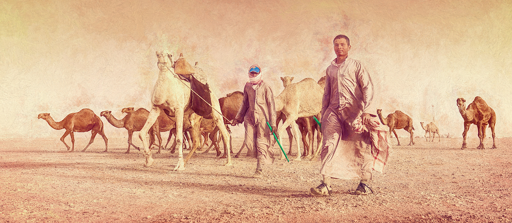 Camel herder's returning home after a day searching the desert food for their camel caravan.