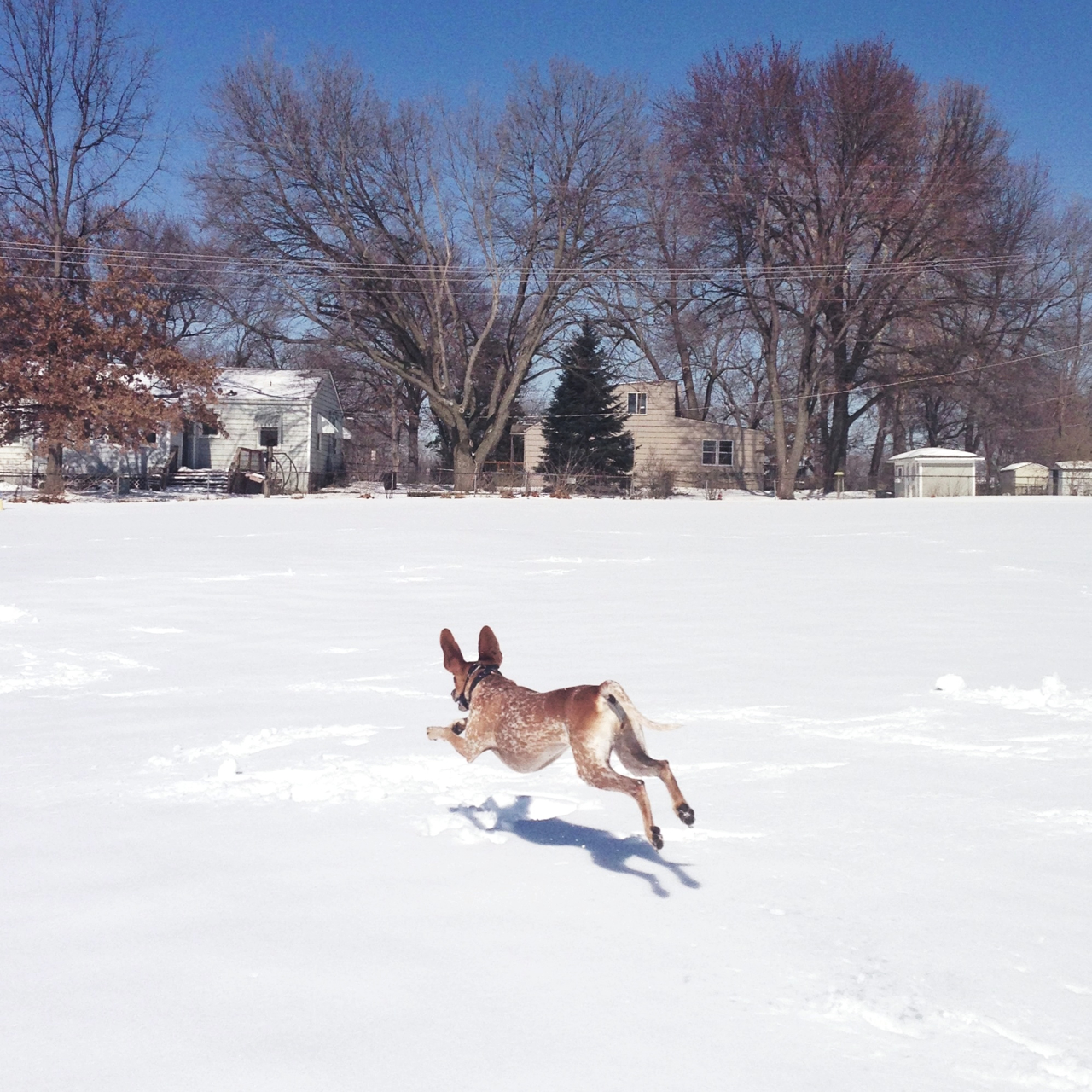maddieonthings :     Kansas City, KS     … we love Maddie in the snow …
