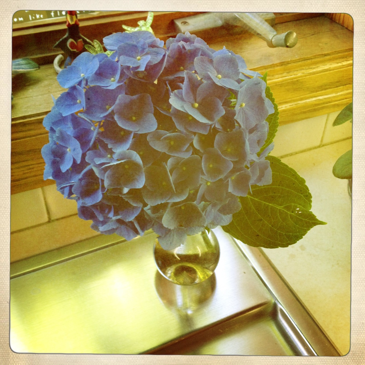 … my favorite summer flower … hydrangeas … and especially when they are a saturated blue like this one …