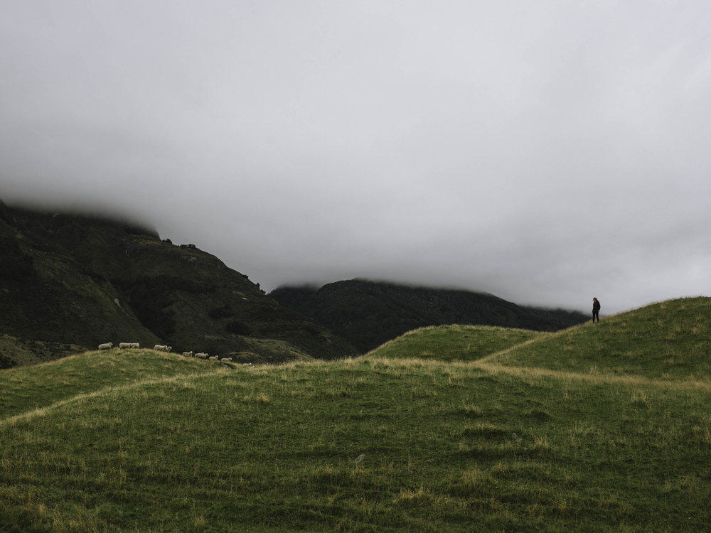 Julia Chases Sheep-1.jpg