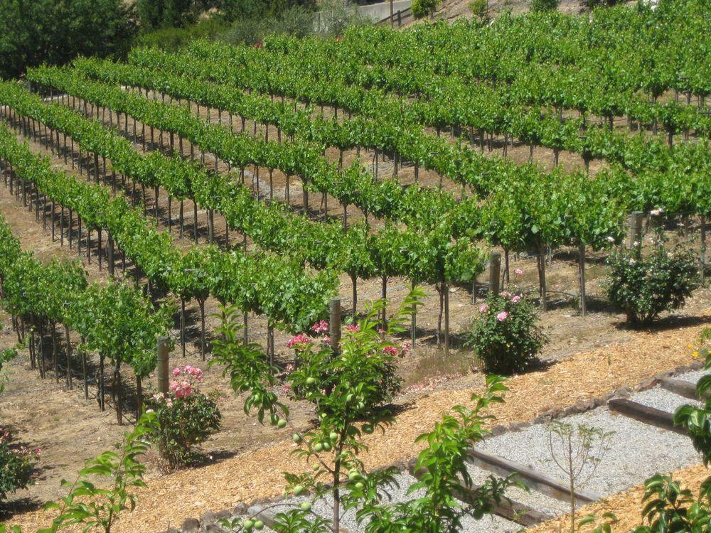 vineyard-215.jpg