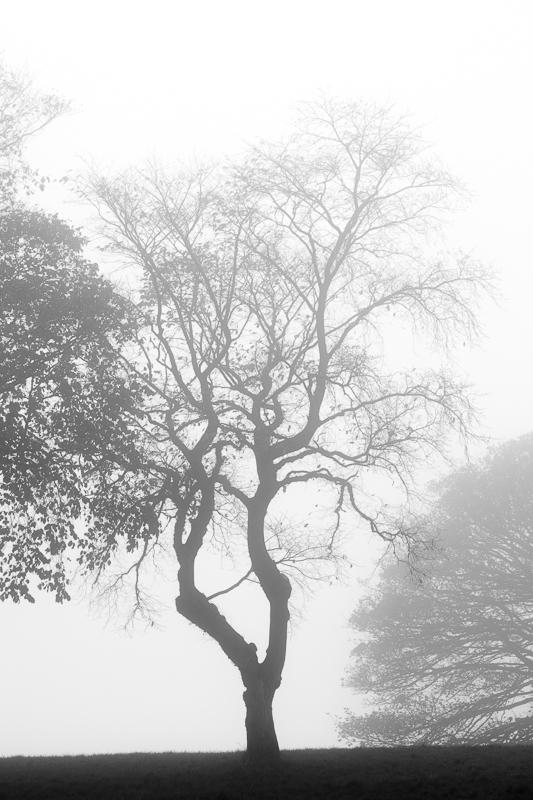 edinburgh foggy tree