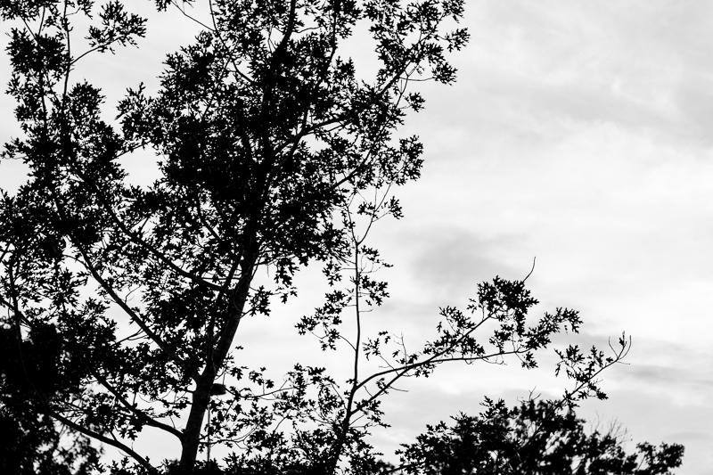 bw trees