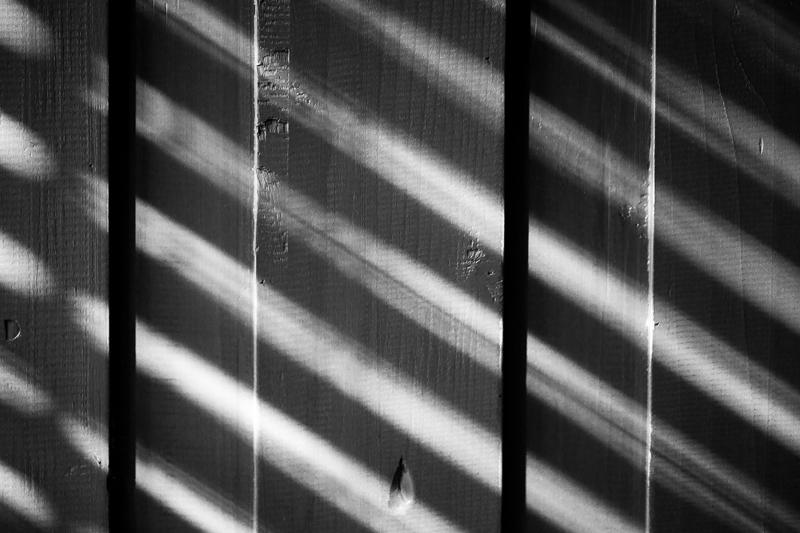 sage bed shadows bw