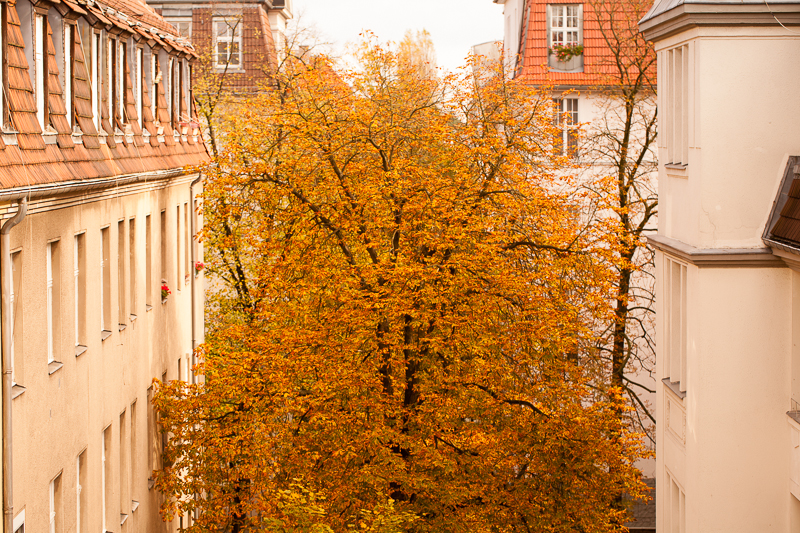 yellow tree from window