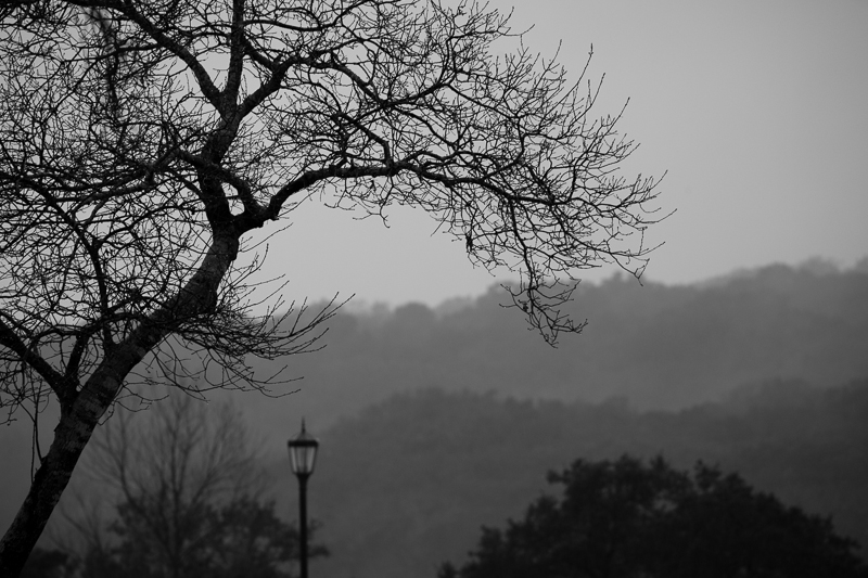 tree and lamp post