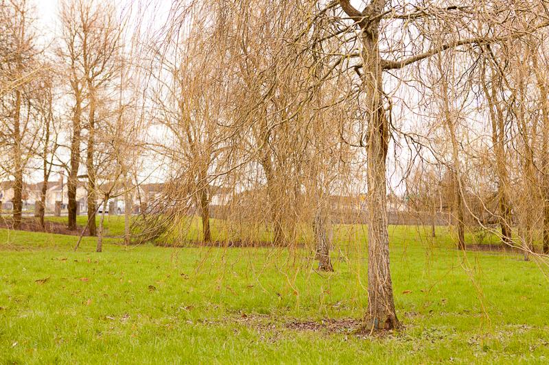 willows ennis