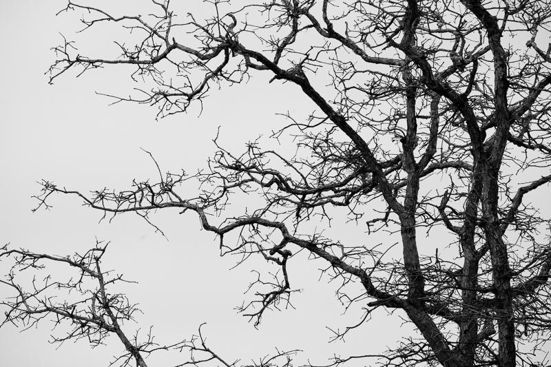 the tree bw