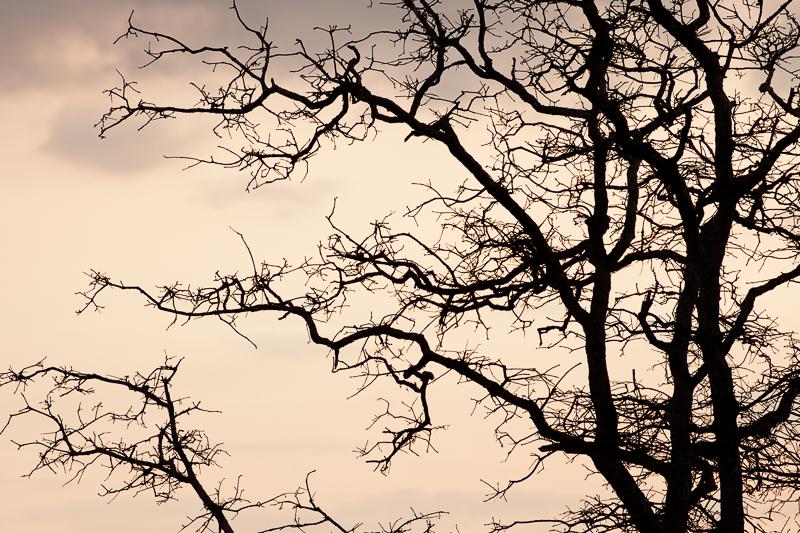 the tree 314