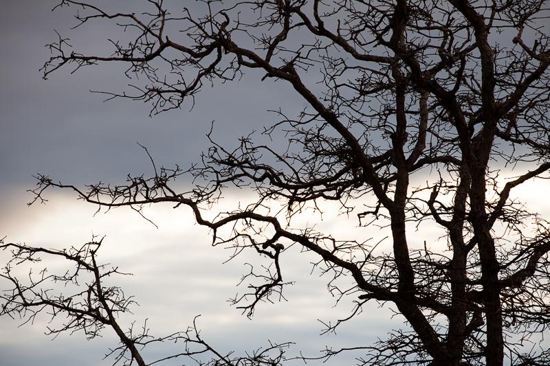 tree 315