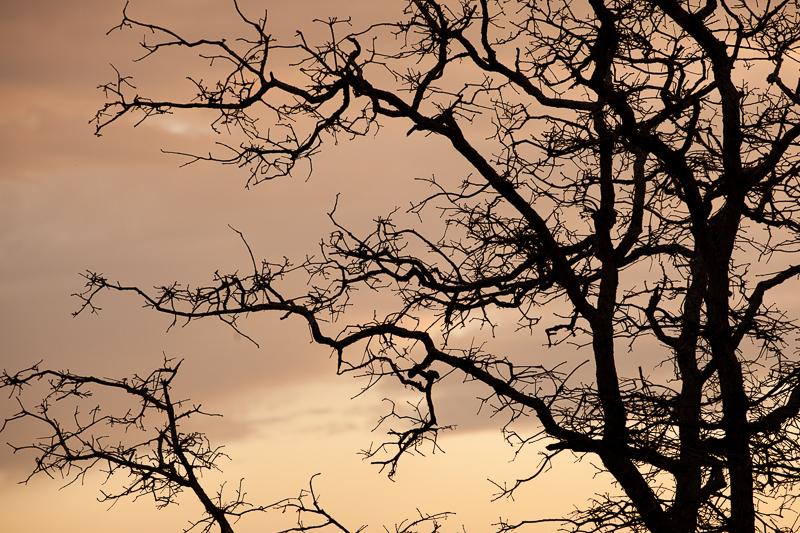 wf tree 317