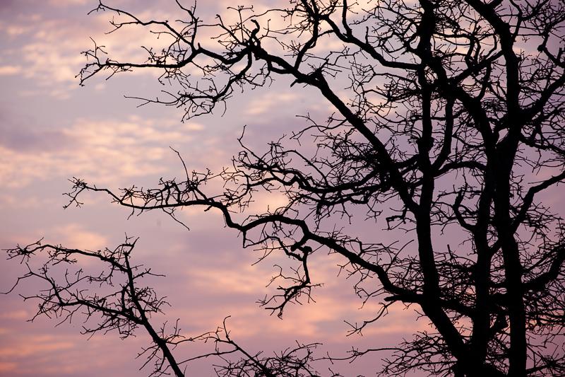 wf tree 319