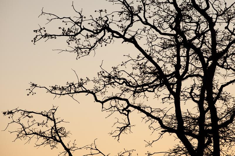 spring wf tree 328