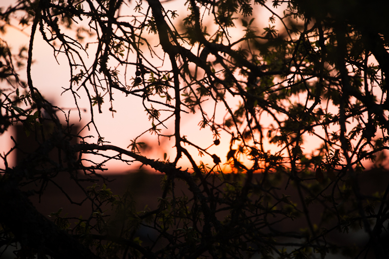 sunset 331