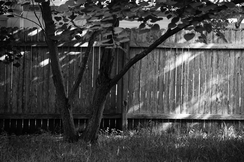 backyard 501