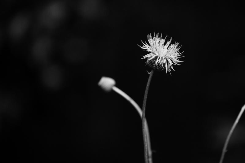 overgrown 514