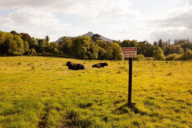 beware of bull
