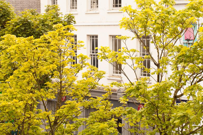 trees suas view