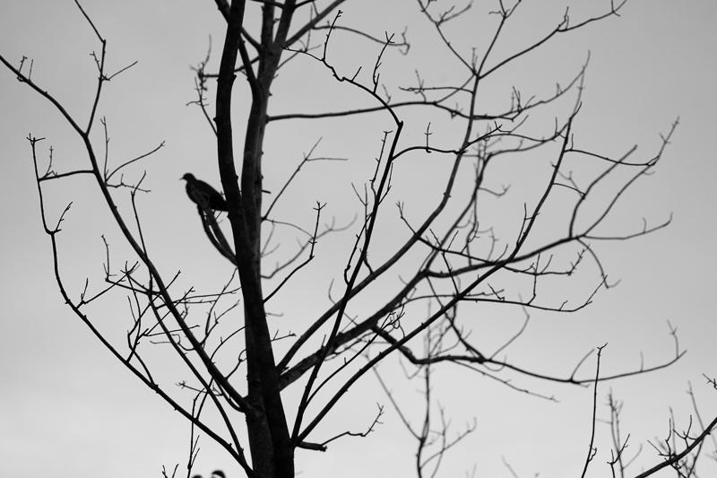 tree bird 627