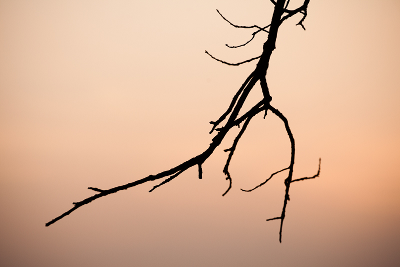 sunset branch
