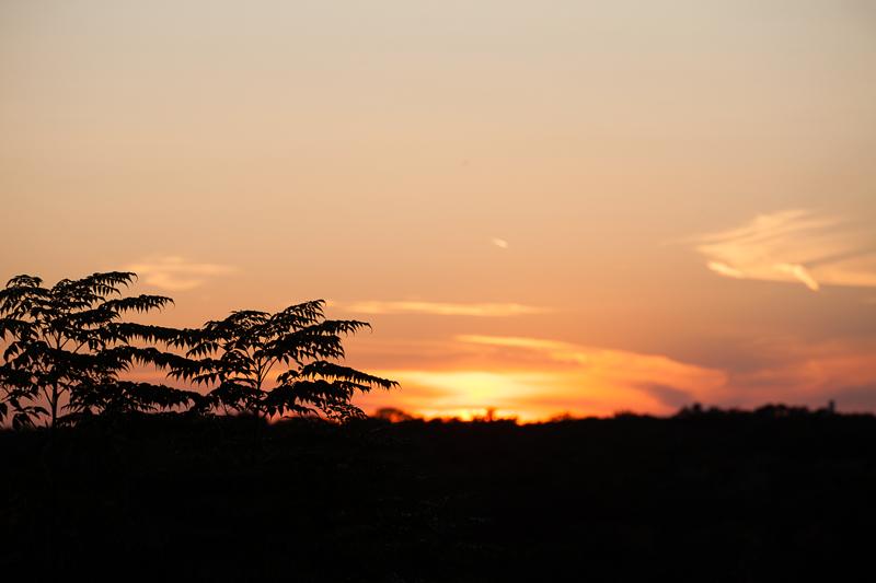 sunset 913