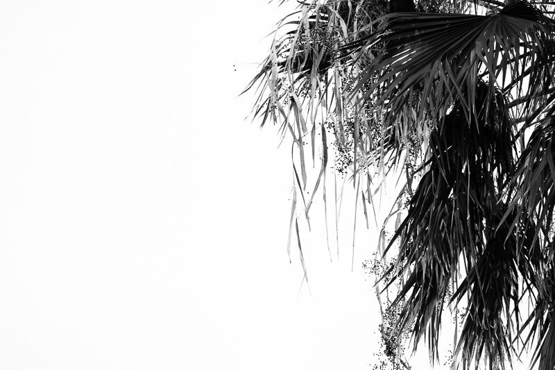 palm bw