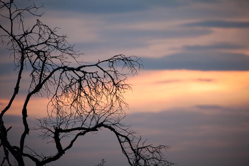 sunset tree 108