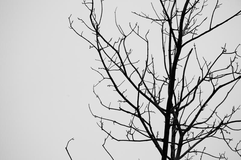 bw tree 512