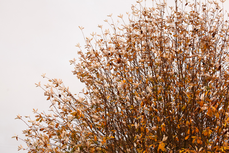 tree1 greyabbey