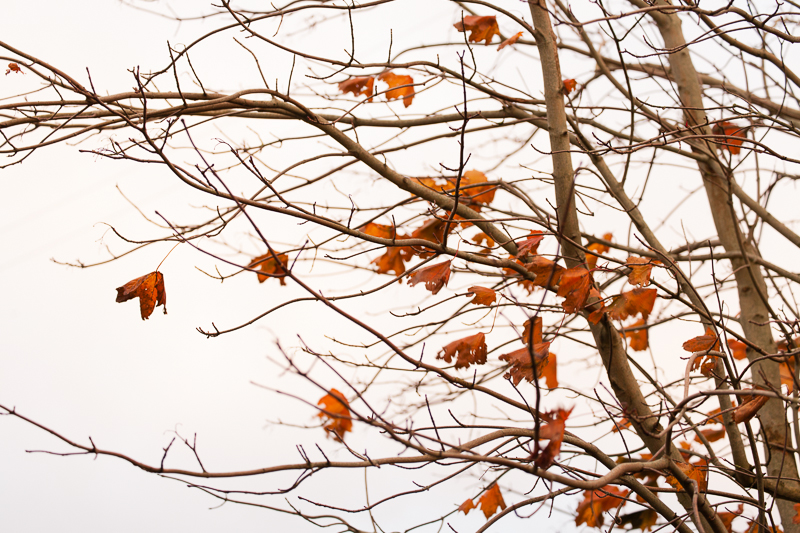 tree2 greyabbey
