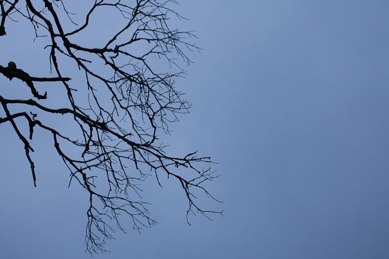 tree branch tccc