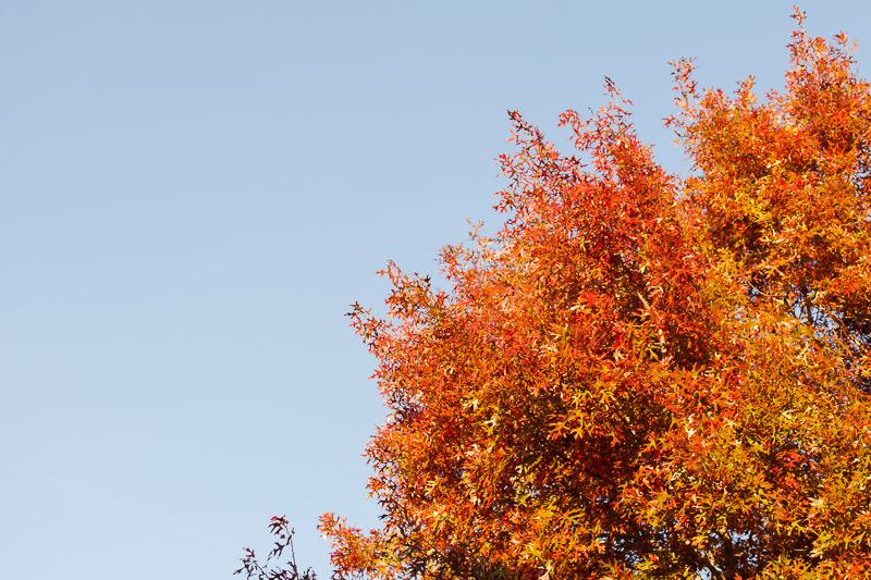 december autumn