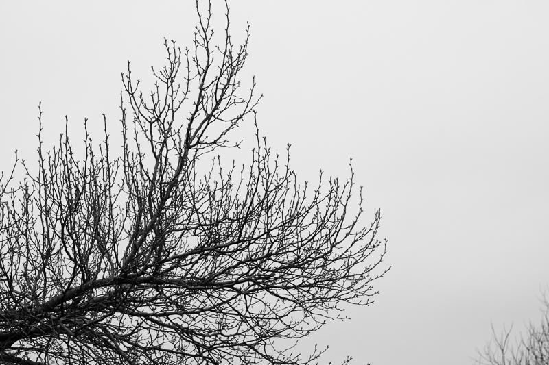 tree 012016