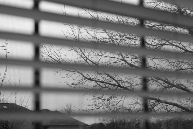 tree thru blinds