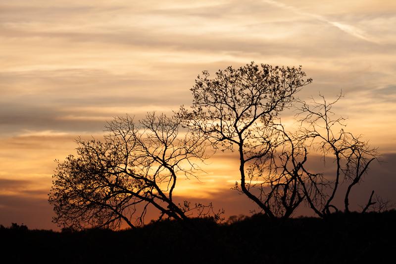 sunset 030416